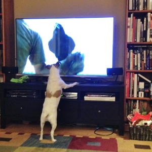 2014-04-10_Dingo Watching NOVA